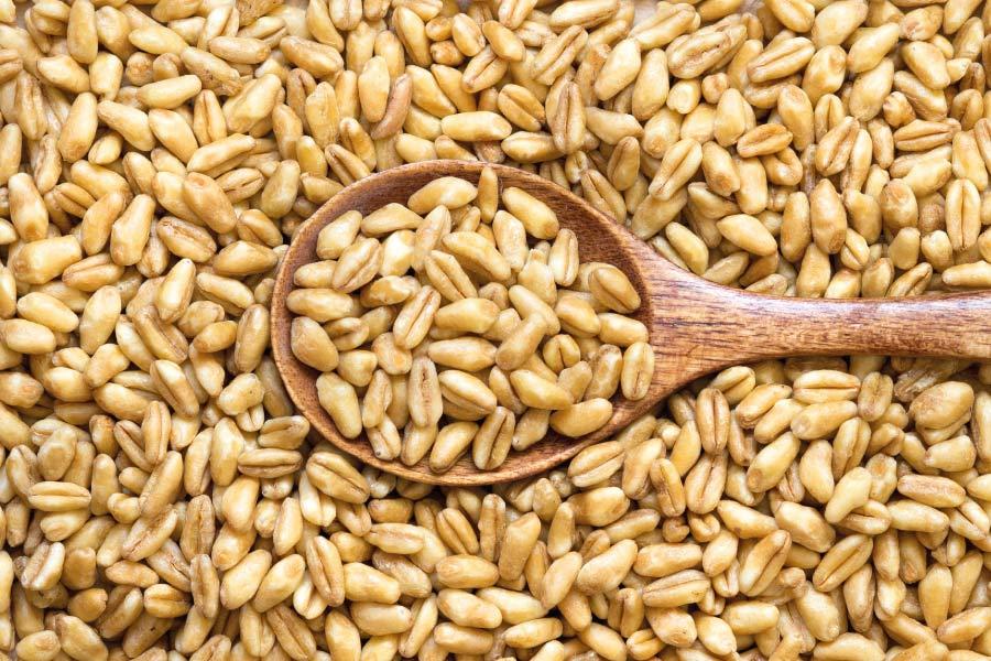 Descubre el trigo tierno