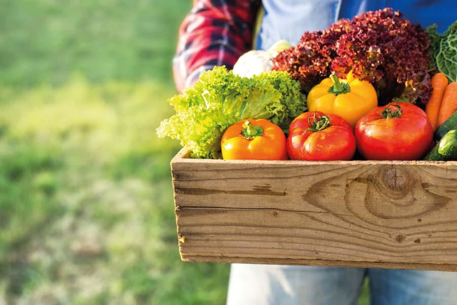 Verduras y frutas de primavera
