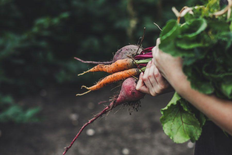 Consells per a una alimentació sostenible