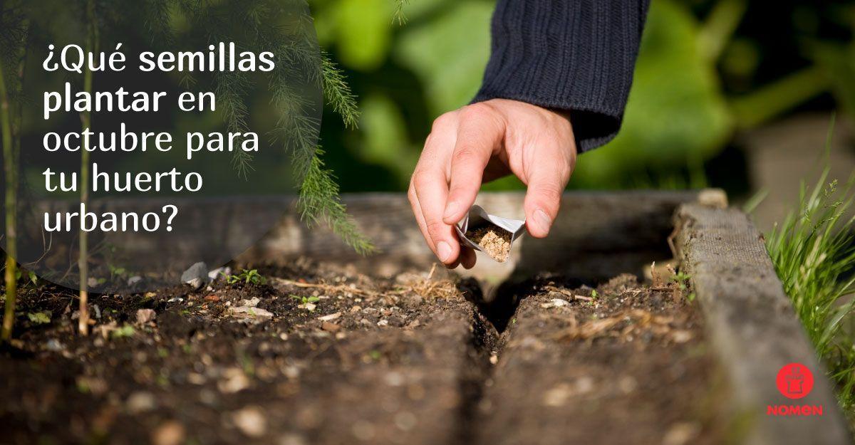 Qué semillas plantar en octubre para tu huerto