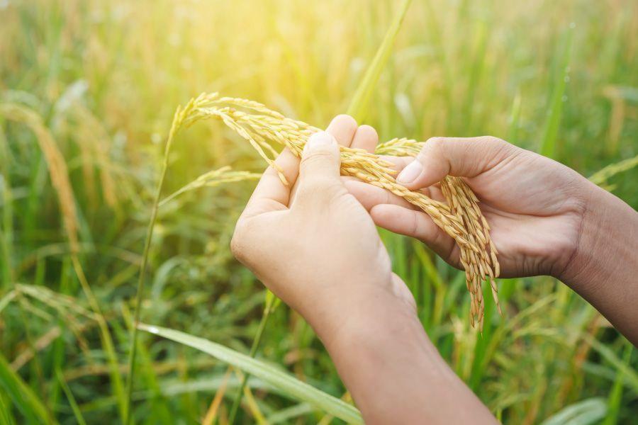 Aprende las diferencias entre ecológicos y bio